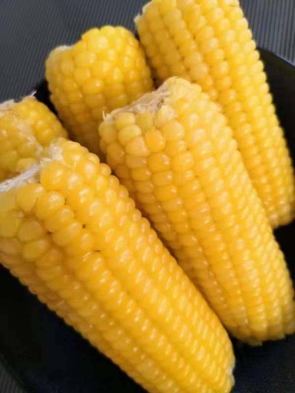 黑龙江甜糯玉米