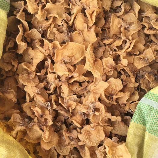 山东省济宁市鱼台县 羊肚耳基地五羊肚耳大量供应干货羊肚耳种植基地种植羊肚耳技术