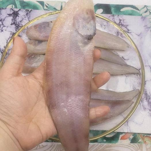 苏州太仓市 龙利鱼比目鱼方板鱼鱼东海1斤5条新鲜急冻