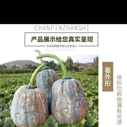 渑池县 贵妃南瓜0.7