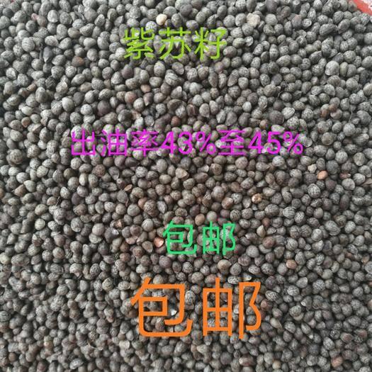 慶陽正寧縣紫蘇子  蘇籽顆粒飽滿干凈無雜質可直接食用,出油率45%可視頻看貨