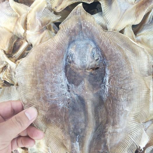 日照方板鱼 鳐鱼老板鱼