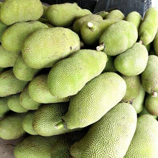 萬寧萬寧市 海南黃肉菠蘿蜜馬來一號產地直發