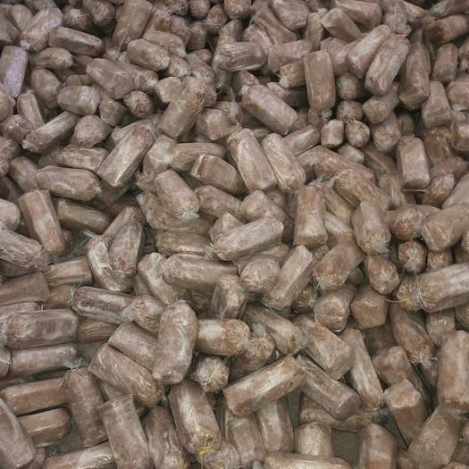 六安金寨县茯苓菌种 大量茯岑菌种 量大价格从优