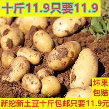 新鲜土豆马铃薯洋芋黄心5斤9斤蔬菜精品大中小多规格特价包邮