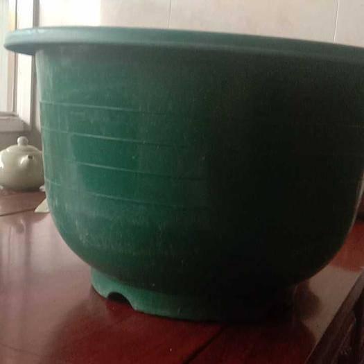 廣州荔灣區荷花盆栽 紅美綠色荷花盆,質量保證隨便摔