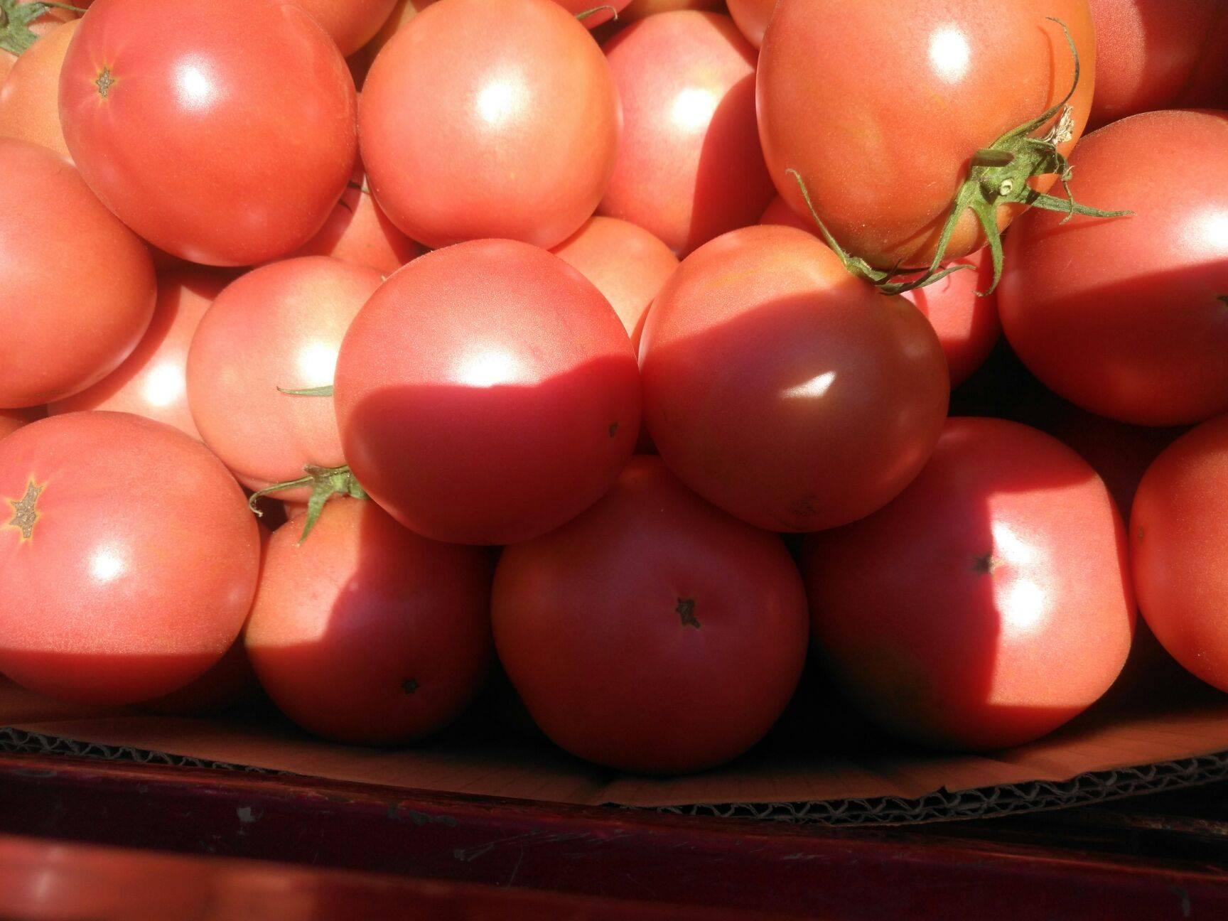 粉果番茄 农家自产,大量供应,物美价廉,大家快来看看吧!