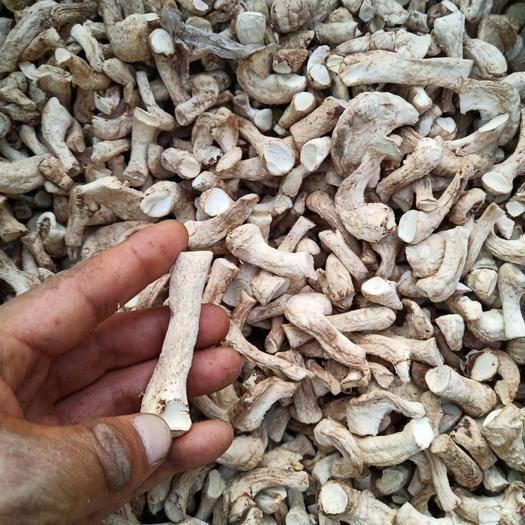 南阳内乡县香菇脚 杂质少、货干颜色纯烘烤,一手货源精心加,双脚度%98