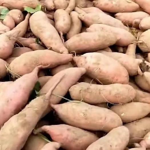 德州夏津县 龙薯九红薯