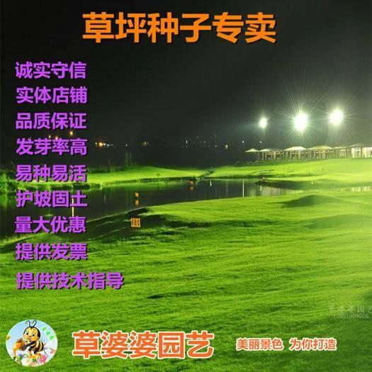 宿迁沭阳县 百喜草种子新种子包邮