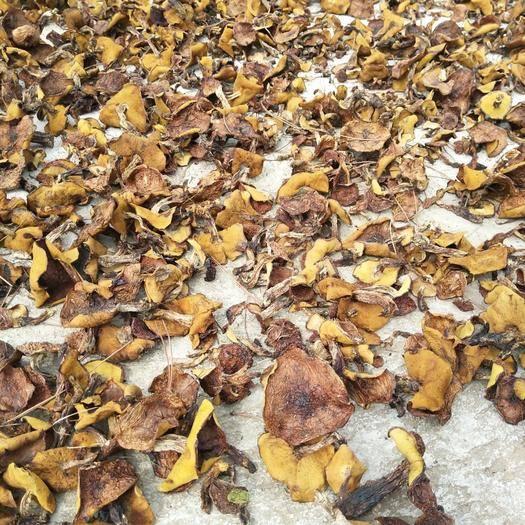 河北省承德市平泉市松蘑 买蘑菇的和卖蘑菇的堵车了