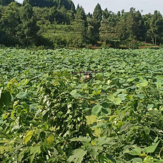 四川省达州市渠县无人机农药喷洒 无人机打药