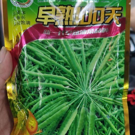夏邑縣 油菜籽種子早熟100天
