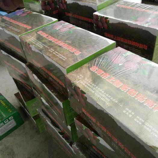 臺州黃巖區 真空包裝東魁楊梅′每一箱6斤