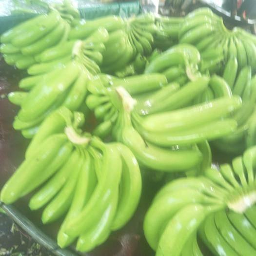 湛江广东香蕉1号 七成熟