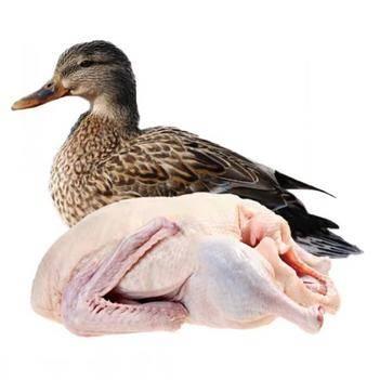 白条鸭 红头雁,白条鹅,有货