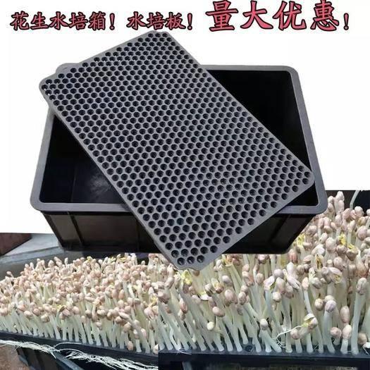 兰陵县 花生芽水培箱,转门做花生芽的