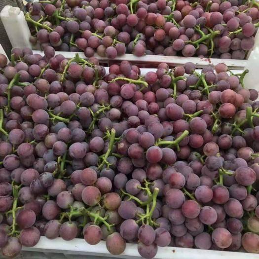 临朐县 巨峰葡萄中端货价格便宜