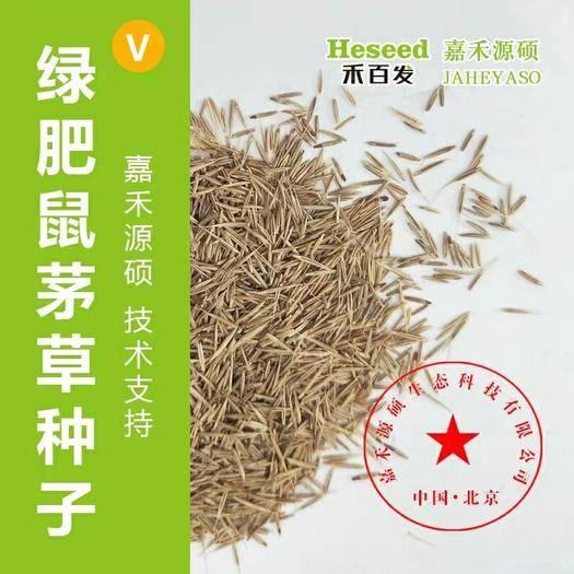 北京大兴 嘉禾源硕鼠茅草种子/进口鼠茅草种子/绿肥鼠茅草