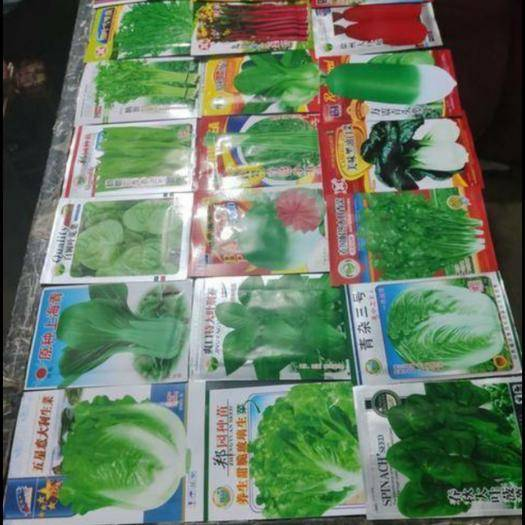 夏邑縣 韭菜種子