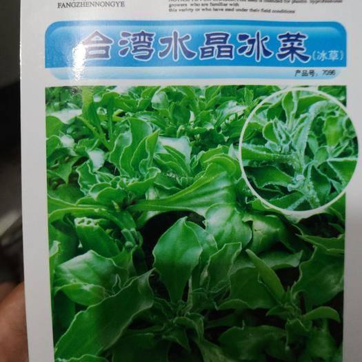 商丘夏邑县 太阳水晶冰菜 冰草种子