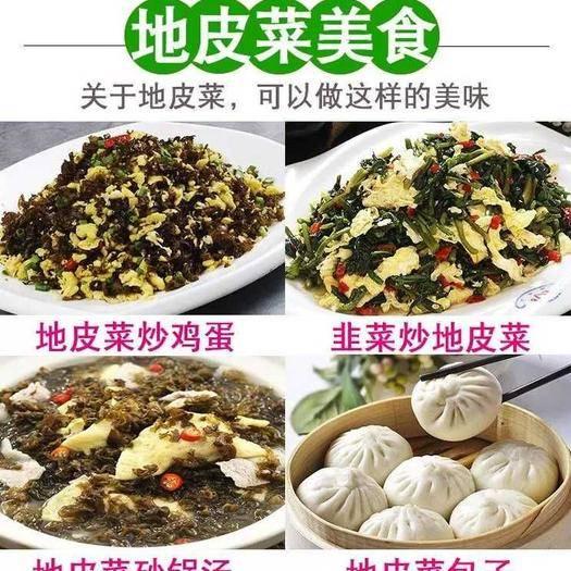 四川省成都市新都区地皮菜 特级