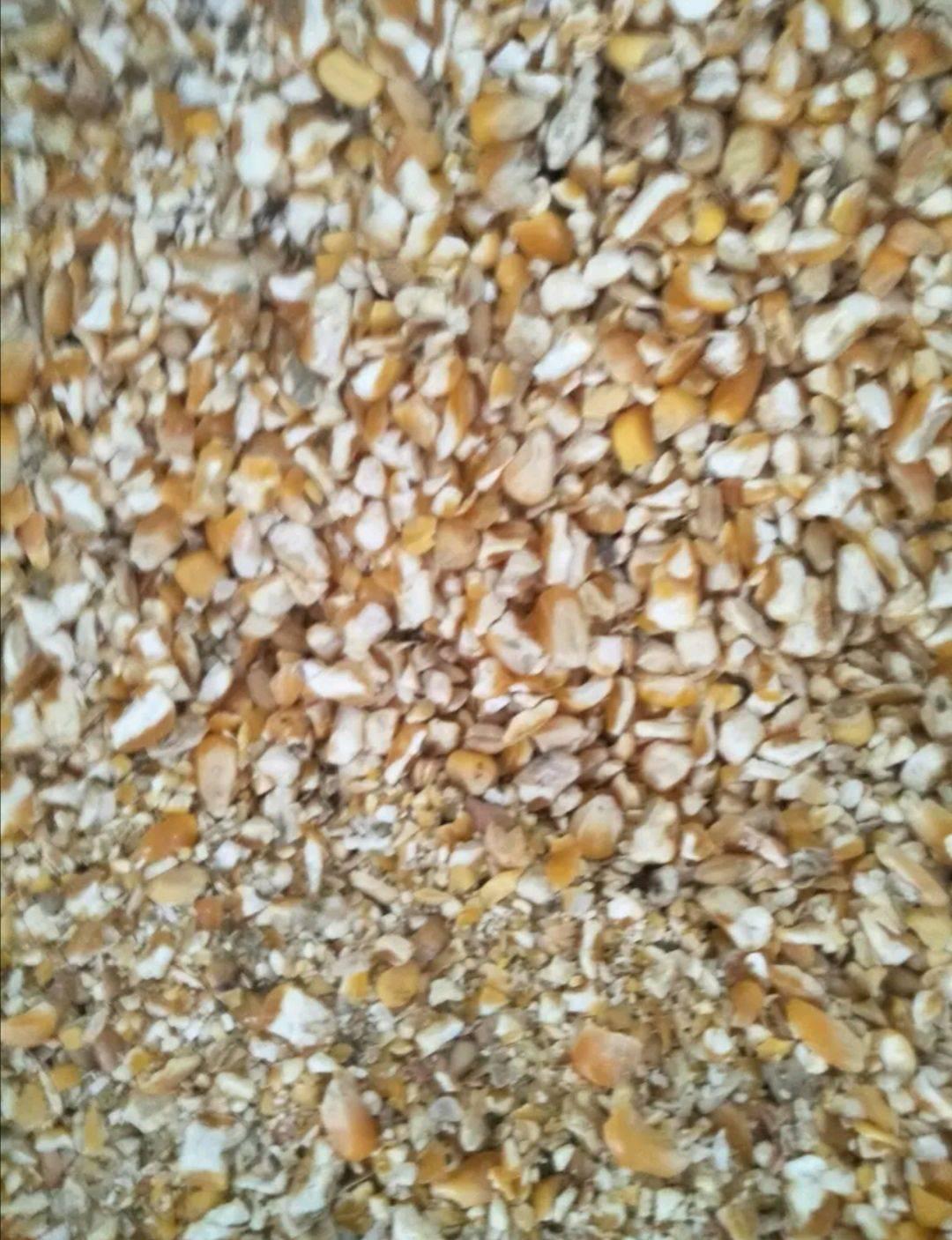 玉米下脚料 干粮碎玉米,下脚料,无石子