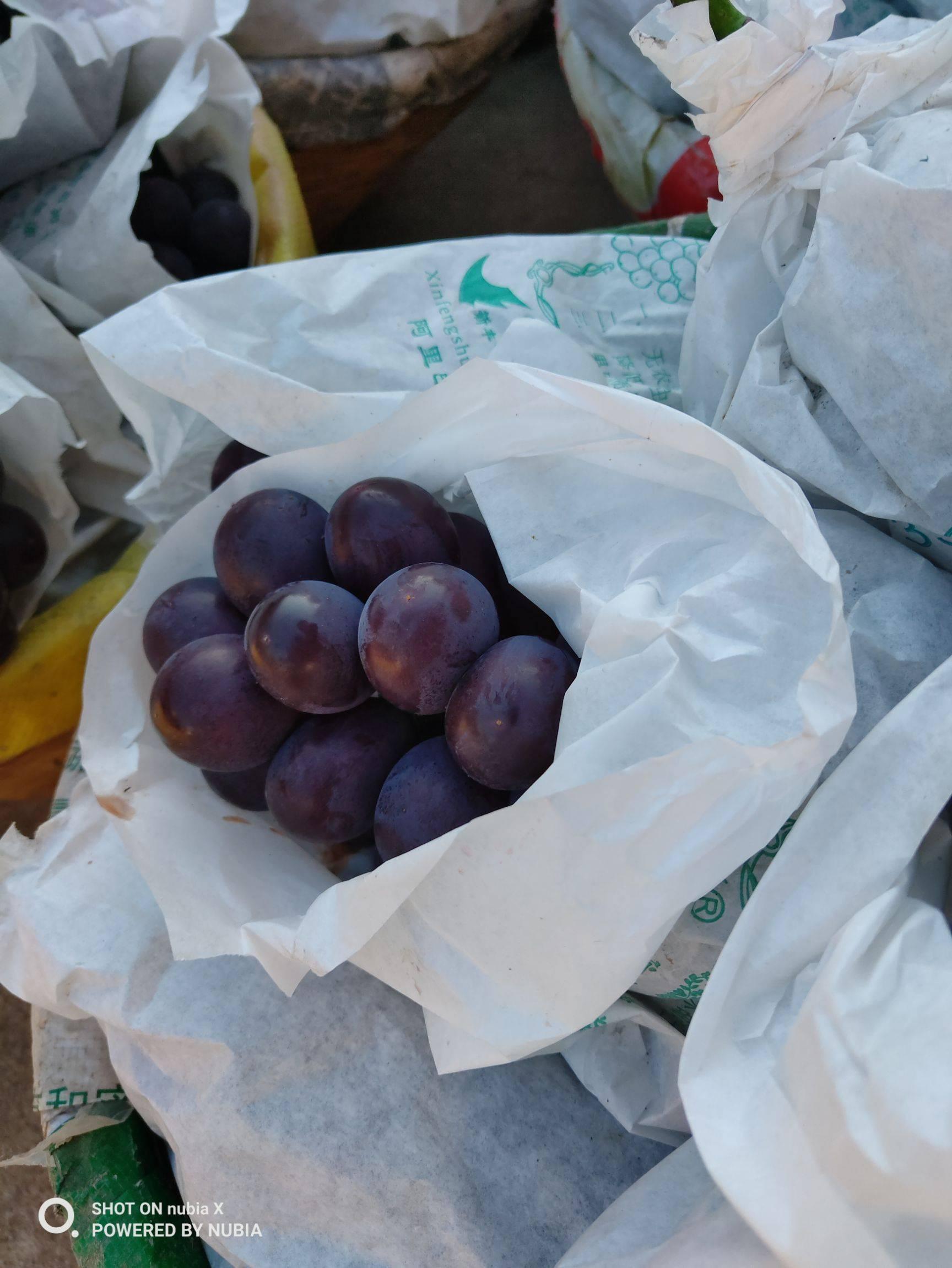 巨峰葡萄 1.5- 2斤 5%以下 1次果