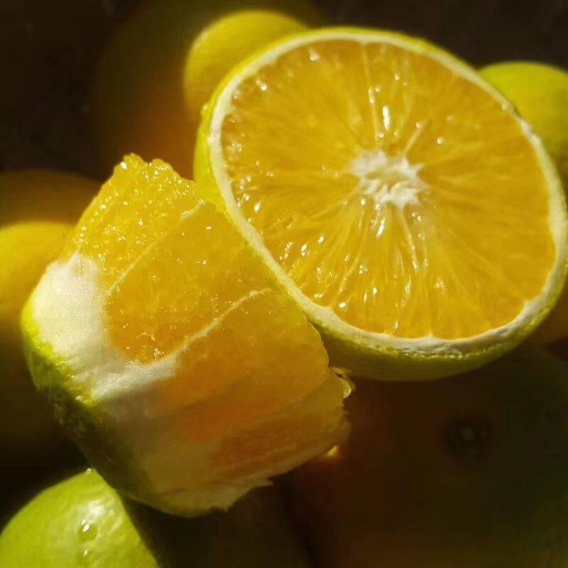 黔阳冰糖橙 【爆款现货上市】云南哀牢山冰糖橙  一件代发