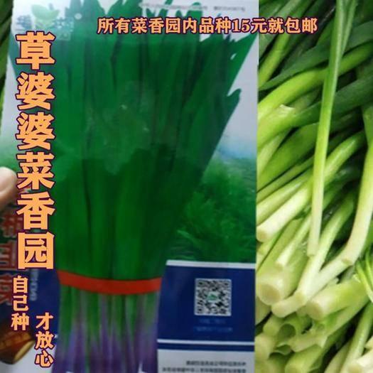 沭陽縣 紫根韭菜種子新種子包郵