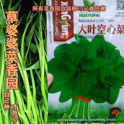 宿迁沭阳县 大叶空心菜种子新种子包邮