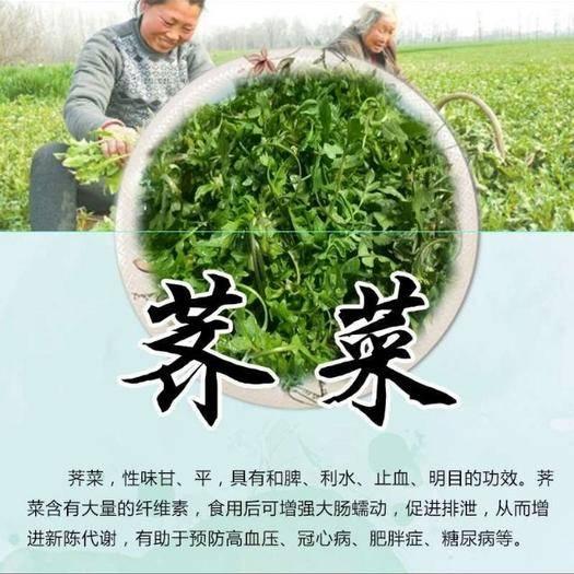 沧州 脱水荠菜馅,泡发率4~5倍,味道浓郁,全国常年供应。