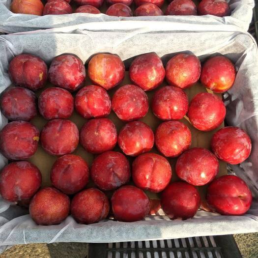 西安周至县 红布林甜度好耐运输。