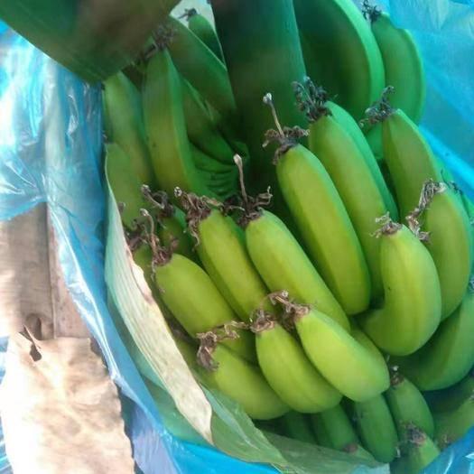 红河河口瑶族自治县 越南热带香蕉,果美,味甜。