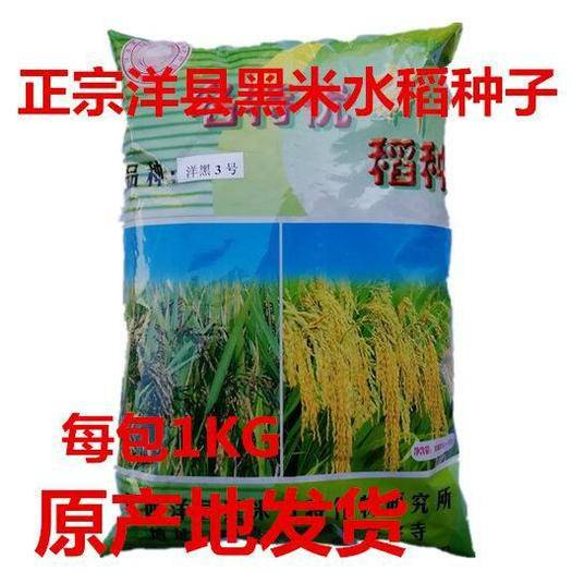 邵阳邵东县水稻种子 正宗洋县黑稻谷黑米种子水稻高产种子1千克黑米稻种子送资料