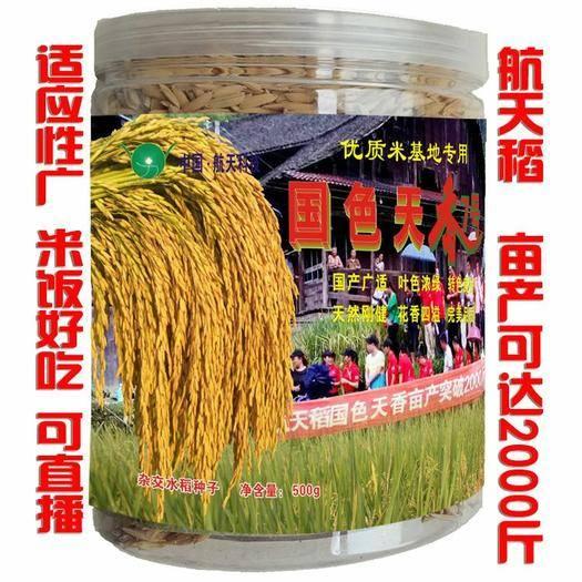 邵阳邵东县 航天稻中国泰米高产2000斤杂交水稻种子香稻稻谷