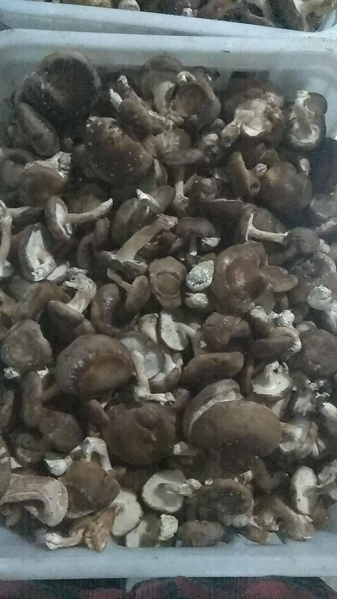 河池天峨縣香菇