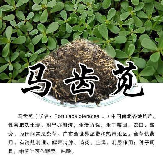 河北省沧州市运河区 脱水马齿苋,泡发率4~5倍,养生长寿菜,全国常年供应