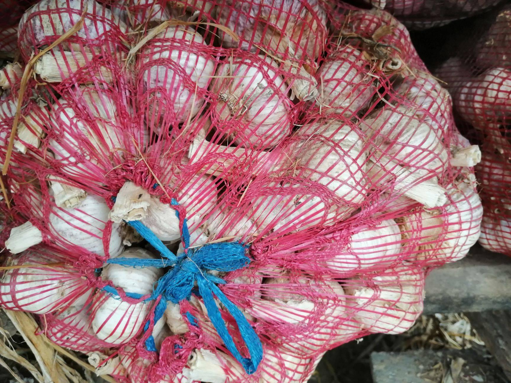 太空2号大蒜 太空2号早熟蒜,5—6公分大混级紫红杂交蒜蒜