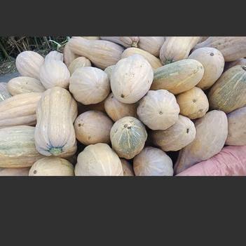 葫芦 大量出售密本南瓜