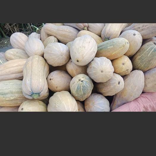 河南省南阳市新野县葫芦 大量出售密本南瓜