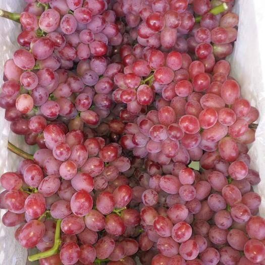 合阳县红峰葡萄 1-1.5斤 5%以下 1次果