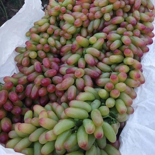 平邑县 大量的金手指葡萄上市了