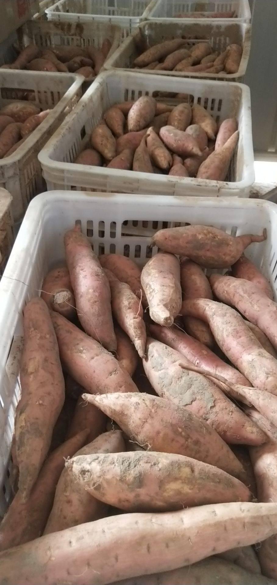 烤红薯蜜薯烟薯25