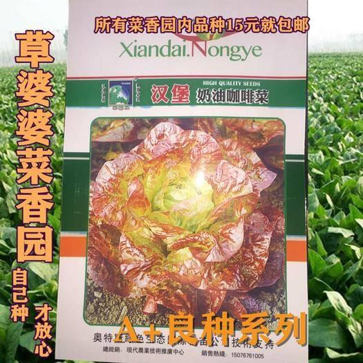 沭陽縣紫葉生菜 精品菜種子咖啡菜種子包郵