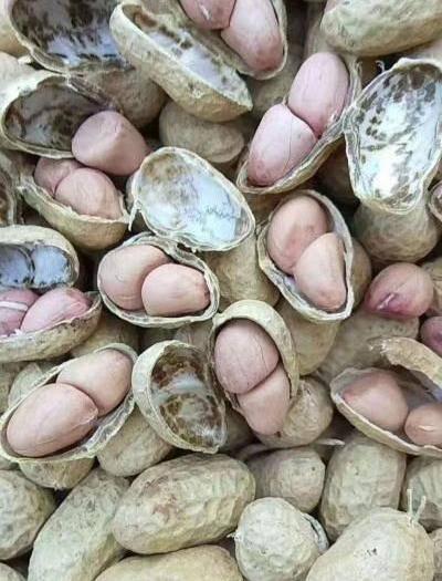 南陽社旗縣羅漢果仁干 大量出售河南南陽羅漢花生果,質優價廉。