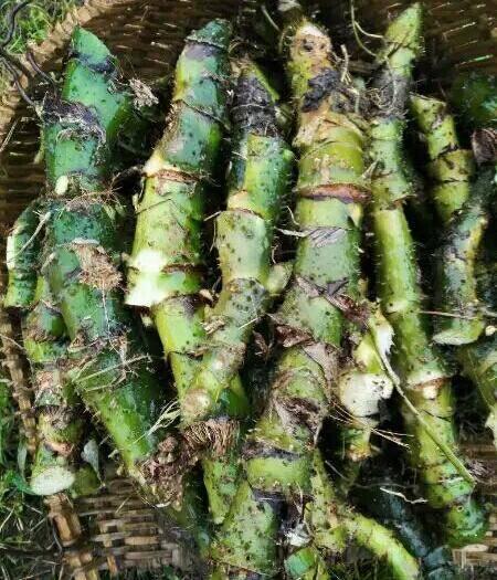 崇左龍州縣 竹節慈菇、水刺芋、旱茨菇、勒茨菇