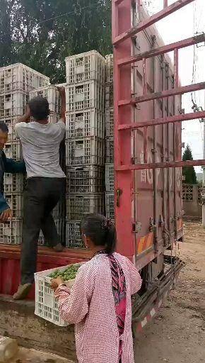 临朐县 青色罐头厂用巨峰葡萄装车走货