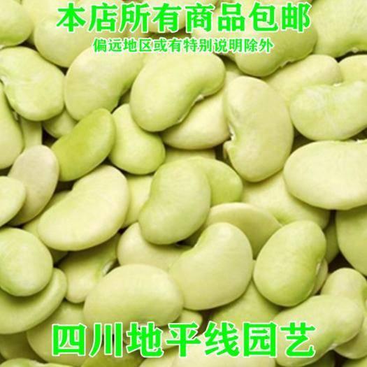 南充 蚕豆种子袋装优质高产原种包邮