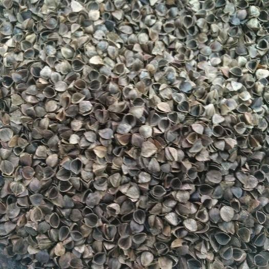 石家庄新华区荞麦壳 高温杀菌水洗荞麦皮成壳率%95